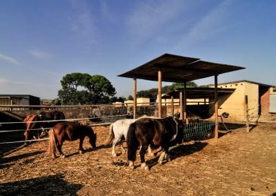hipica-can-caldes-sant-cugat-barcelona-caballo (6)