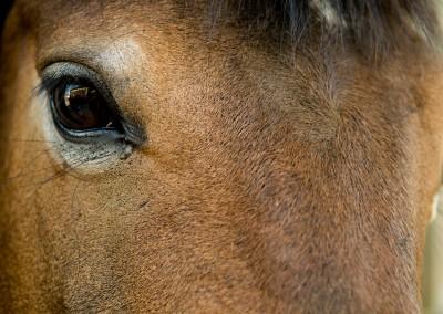 hipica-can-caldes-sant-cugat-barcelona-caballo (8)