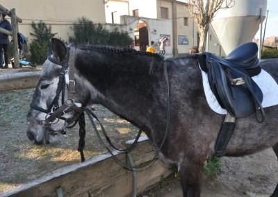 Can Caldes Sant Antoni 201541